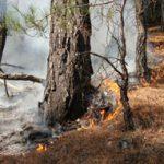 Orman yangını (arşiv)