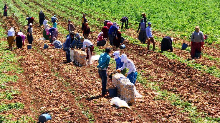 Türkiye'de tarım