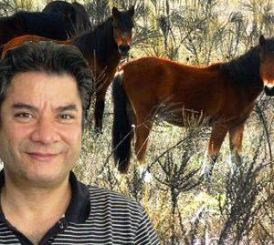 Isparta'nın Sütçüler ilçesindeki binlerce yaban atı